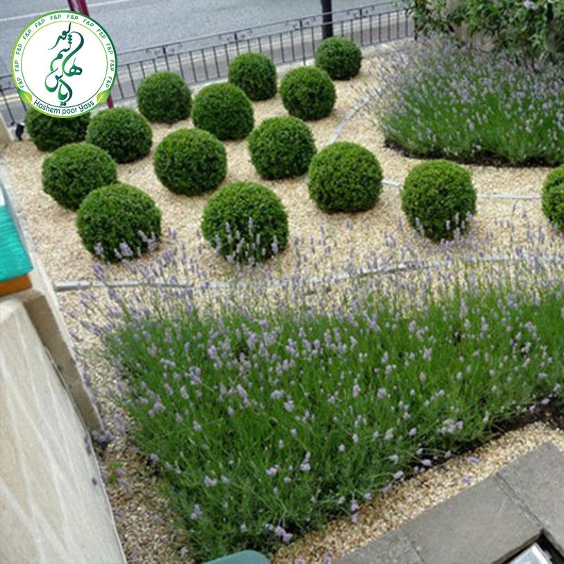 فضای سبز و تزئینات ساختمانی