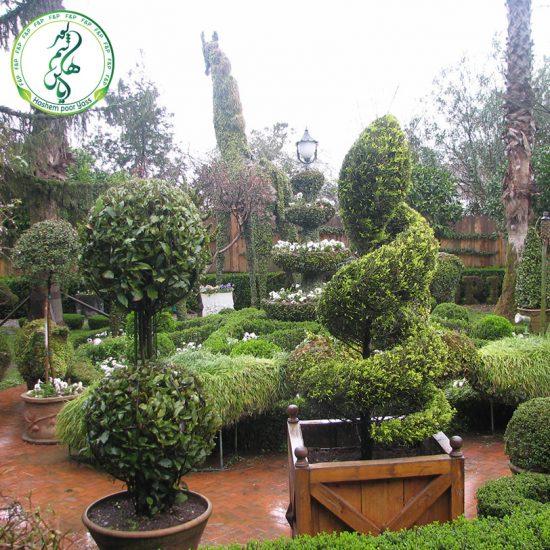 فضای سبز و تزئینات درختان