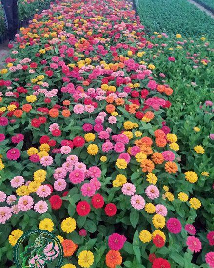زیباترین گلهای فصلی