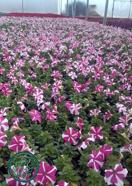 صادرات گل و گیاه فصلی