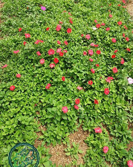 گل های زیبای فصلی